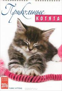 Календарь 2016 (на спирали). Прикольные котята / Funny Kittens