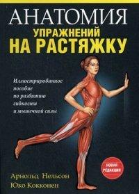 Анатомия упражнений на растяжку
